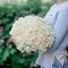 Букет из 51 белой розы (Россия)