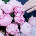 Букет из 15 розовых пионов заказать