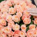 101 роза Мисс Пигги заказать