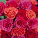 Букет из 25 роз яркий микс (Эквадор) заказать
