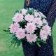 Букет из 15 одноголовых хризантем