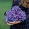 Букет из 3 фиолетовых гортензий