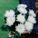 Букет из 9 одноголовых хризантем купить