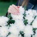 Букет из 25 одноголовых хризантем купить
