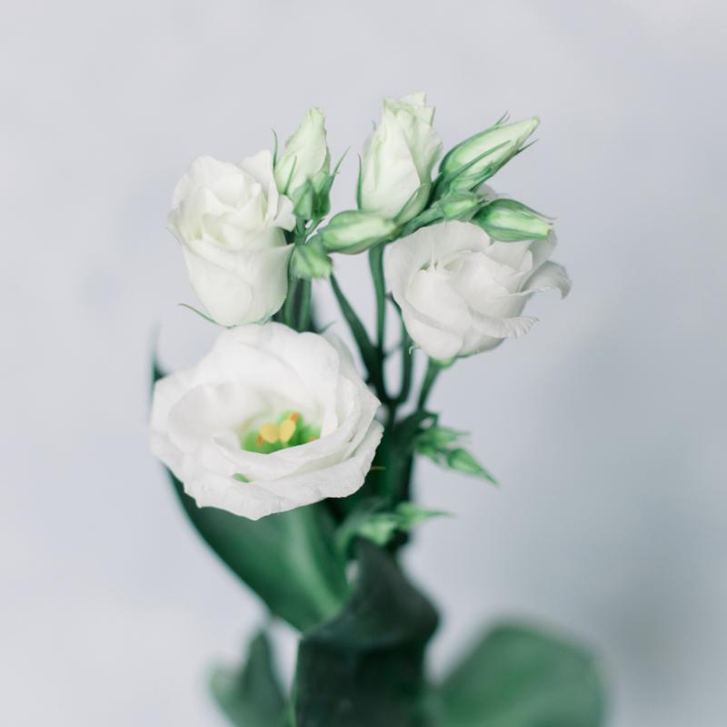 Лизиантус белый с доставкой