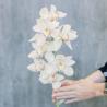 Орхидея Цимбидиум белая