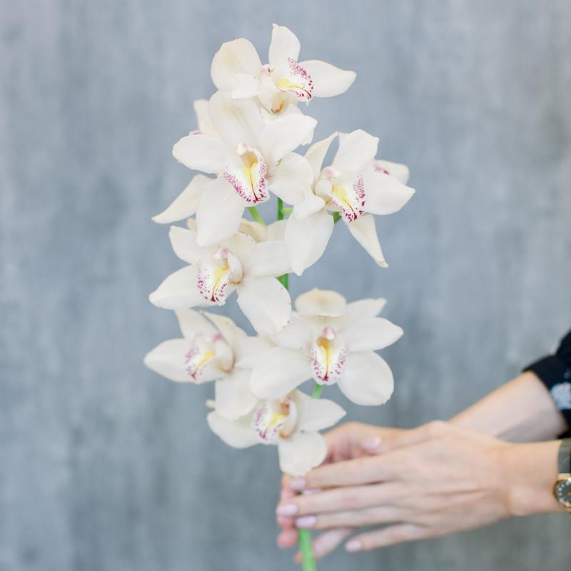 Орхидея Цимбидиум белая с доставкой