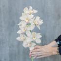 Орхидея Цимбидиум белая купить