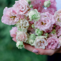 Букет из 9 розовых лизиантусов купить
