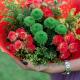 Букет с кустовыми розами и кустовой хризантемой