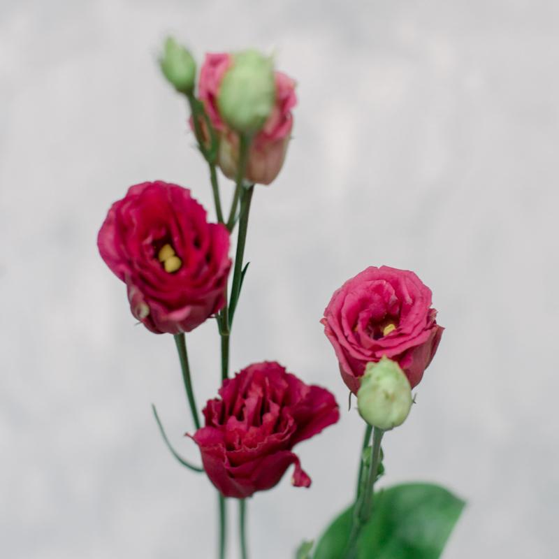 Лизиантус розовый с доставкой