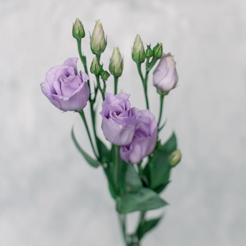 Лизиантус фиолетовый с доставкой