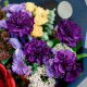 Букет с гвоздиками, кустовыми розами и амариллисом