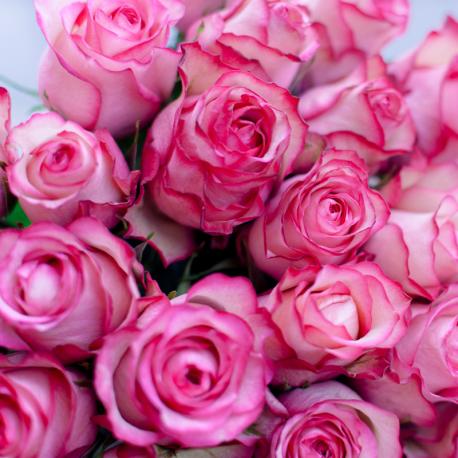 Букет из 25 роз Carousel (Эквадор)
