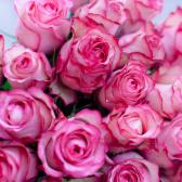Букет из 25 крупных роз Carousel (Эквадор)