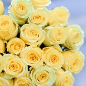 Букет из 25 жёлтых роз (Эквадор) купить