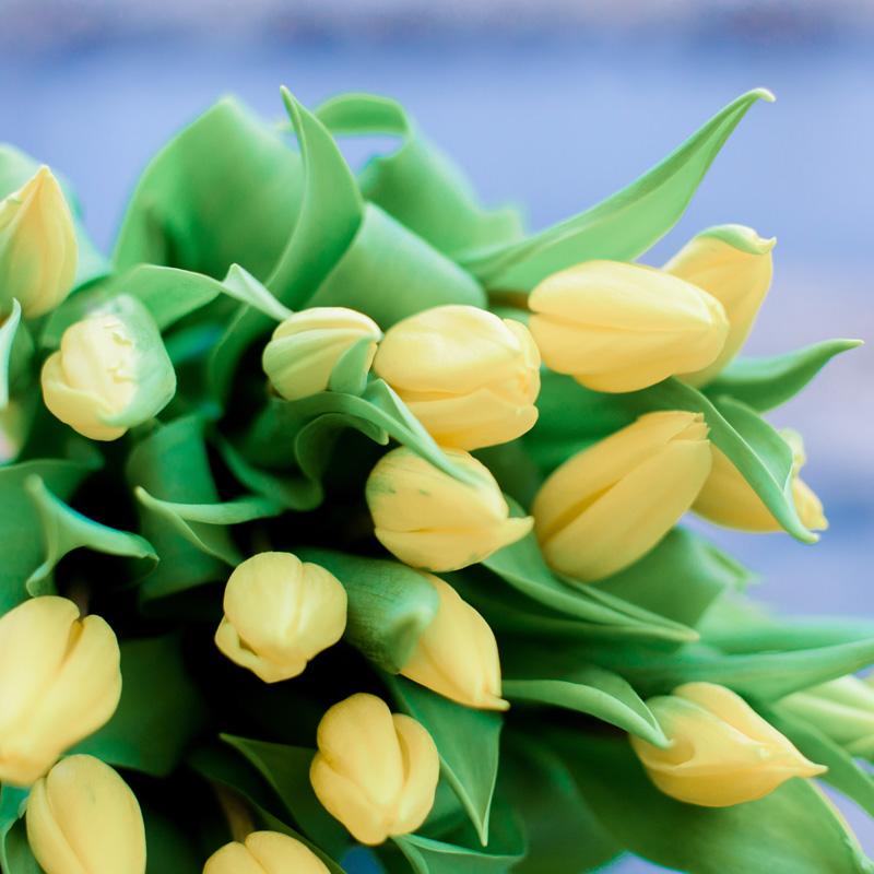 25 жёлтых тюльпанов с доставкой