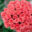 51 коралловая роза купить