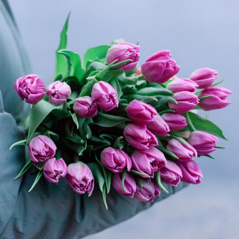 25 тюльпанов с доставкой