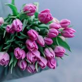 25 тюльпанов купить