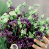 Букет из 15 фиолетовых и белых лизиатусов купить