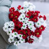 Букет из 15 кустовых красных и белых хризантем