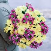 Букет из 15 желтых и малиновых кустовых хризантем купить