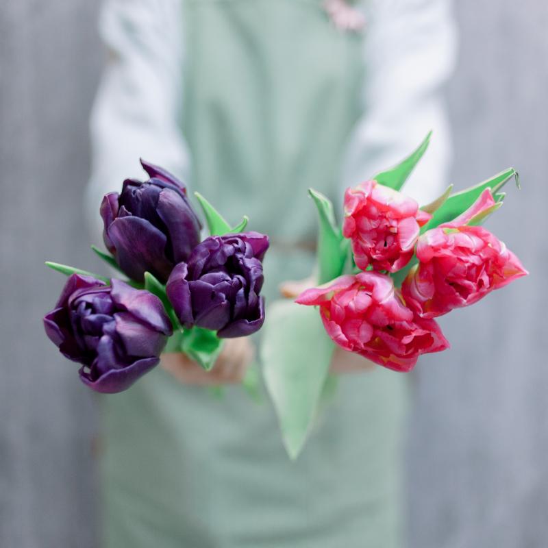 3 тюльпана (микс) с доставкой