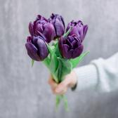 5 тюльпанов (микс) заказать