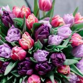 Тюльпан (микс) купить