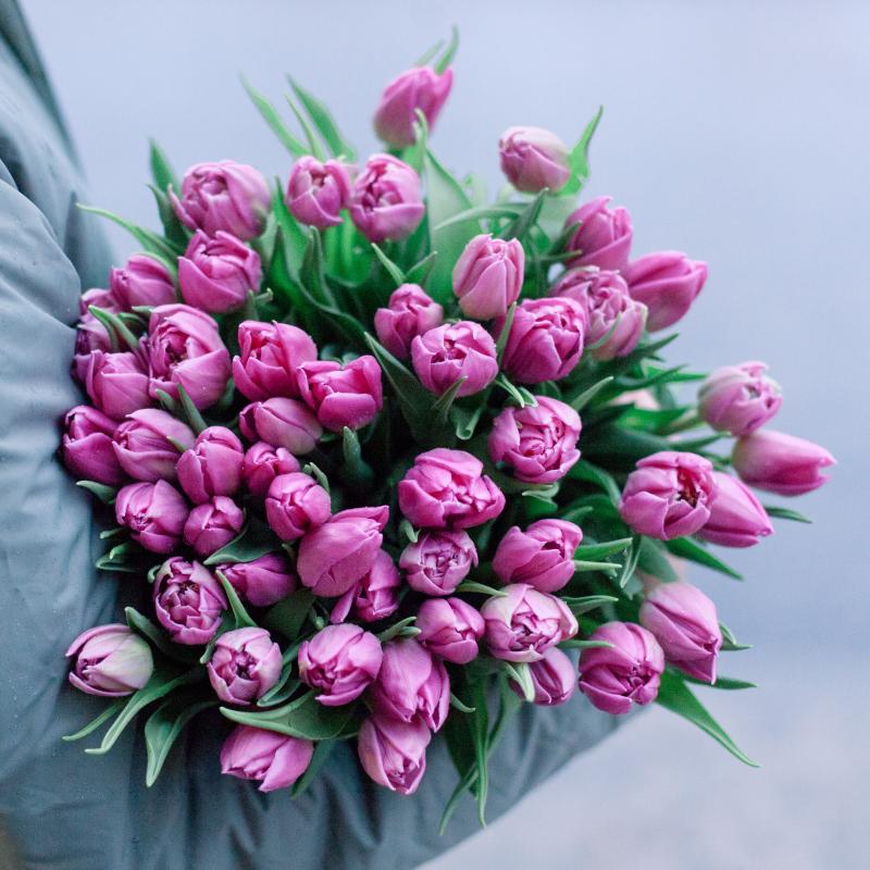 51 розовый тюльпан с доставкой