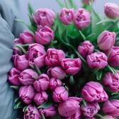 51 розовый тюльпан купить