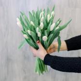 25 белых тюльпанов купить