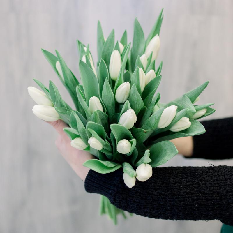 25 белых тюльпанов с доставкой