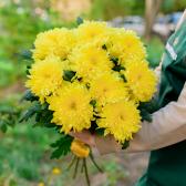 Букет из 9 жёлтых хризантем заказать