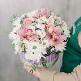 Коробка с розами, хризантемой и альстромерией заказать