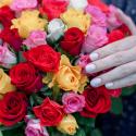 51 разноцветная роза (Кения) купить