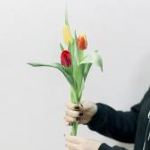 3 тюльпана (яркий микс)