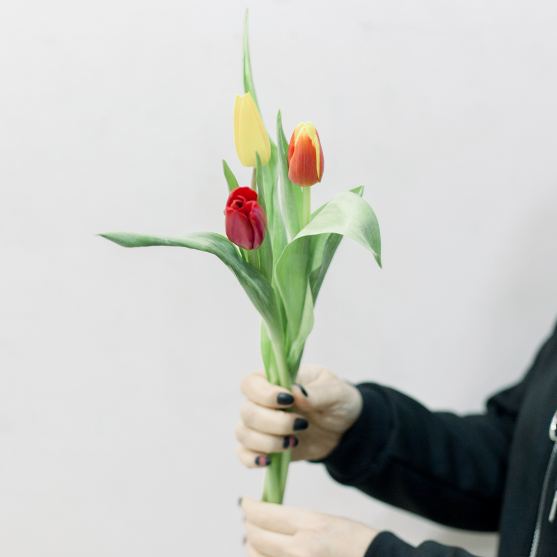 3 тюльпана (яркий микс) с доставкой