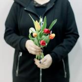 5 тюльпанов (яркий микс) заказать