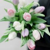 11 тюльпанов (нежный микс) заказать