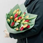 25 тюльпанов в упаковке (яркий микс) купить
