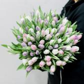 101 тюльпан (нежный микс) купить