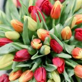 51 тюльпан (яркий микс) заказать