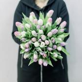 51 тюльпан (нежный микс) заказать