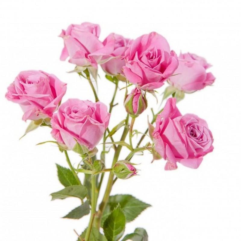 Ярко розовая с доставкой
