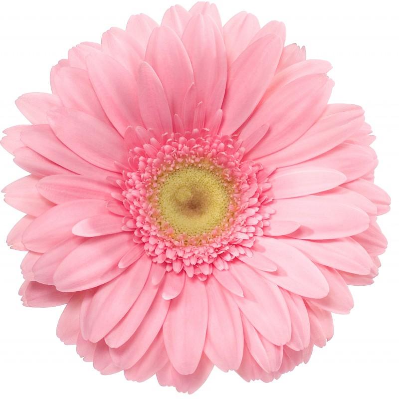 Розовая с доставкой
