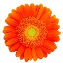 Оранжевая купить