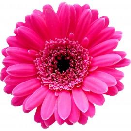 Ярко розовая