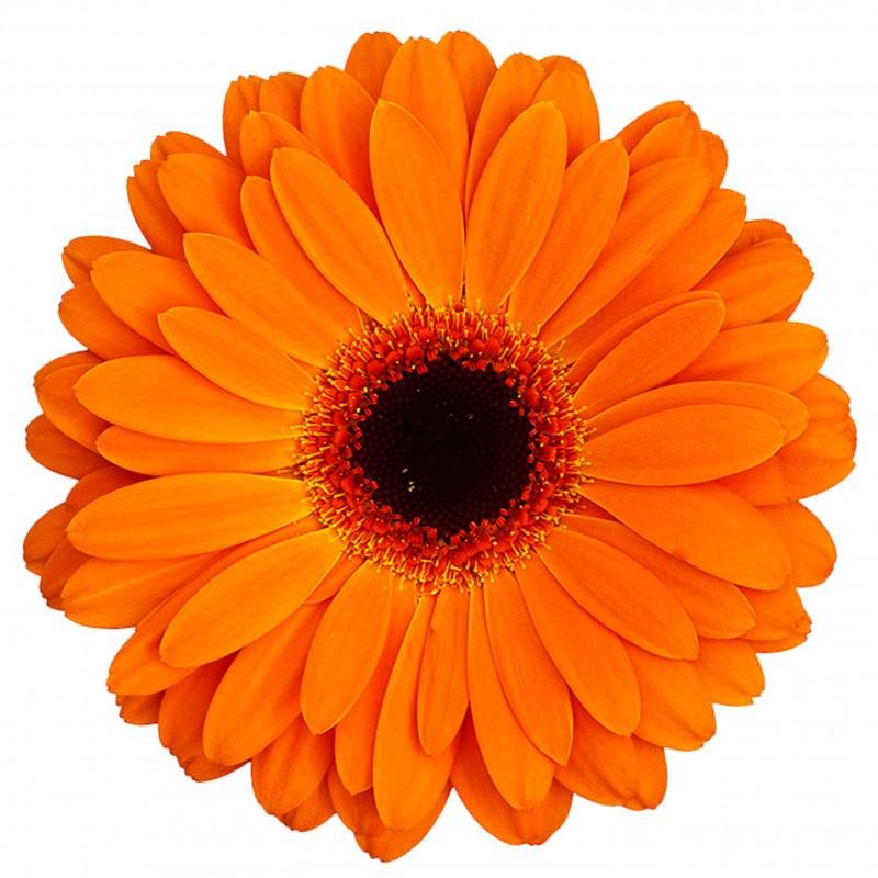 Оранжевая с доставкой